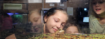 Students gather around the tank of a toad